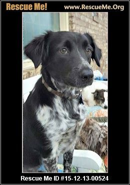 Border Collie Rescue Colorado Border Collie Collie Dog Adoption