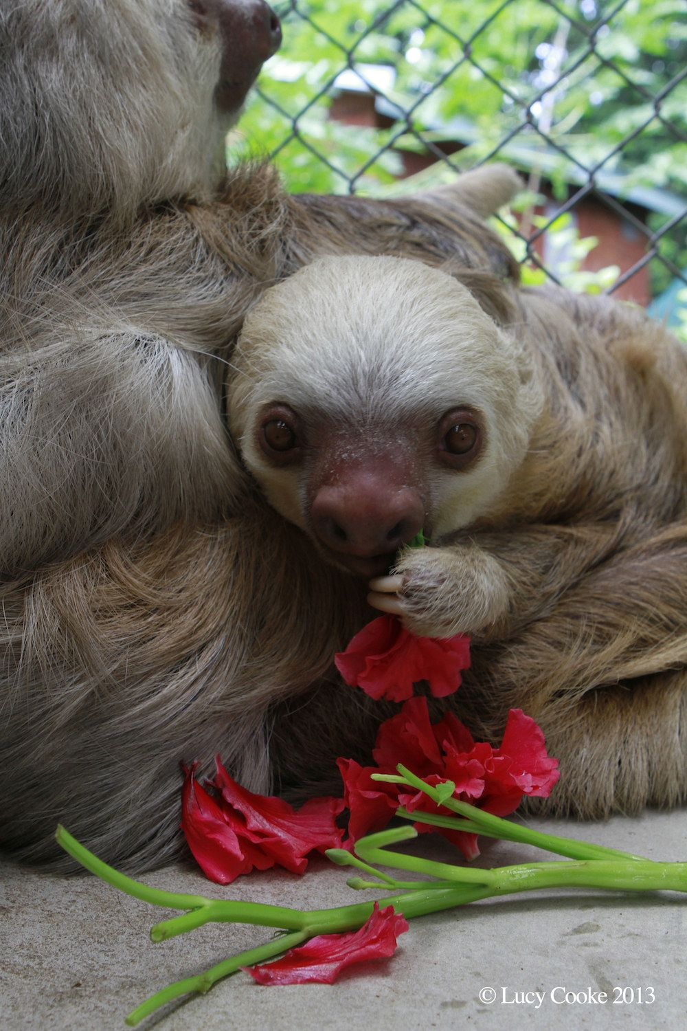 The 29 Cutest Sloths That Ever Slothed For the Love of