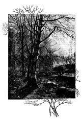 Antique illustration of winter tree illustration