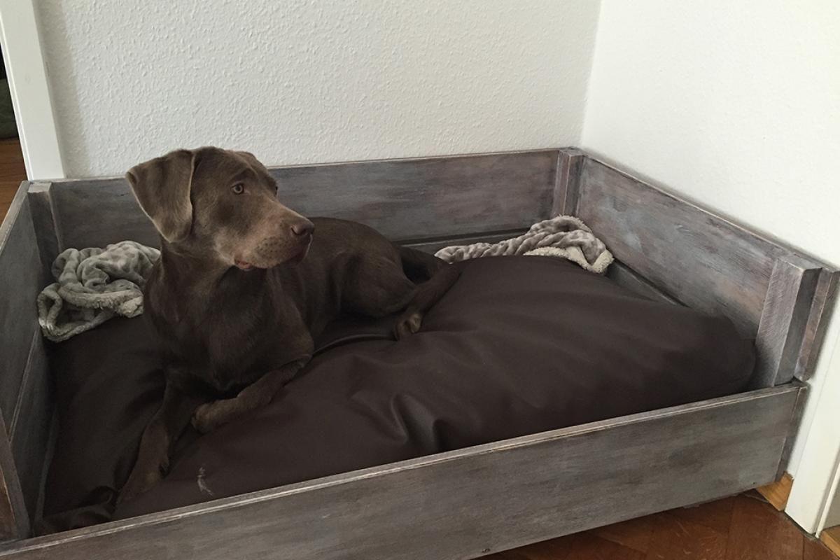 hundebett a la linda nova pinterest hunde hunde bett und hundebett. Black Bedroom Furniture Sets. Home Design Ideas