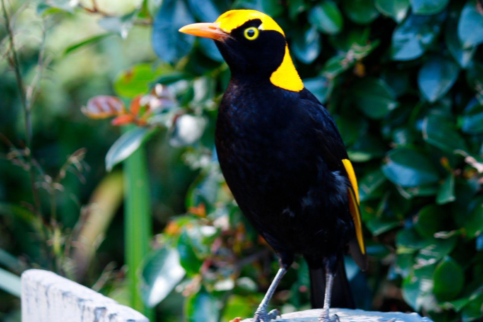 tropical rainforest animals and plants fruit pigeons