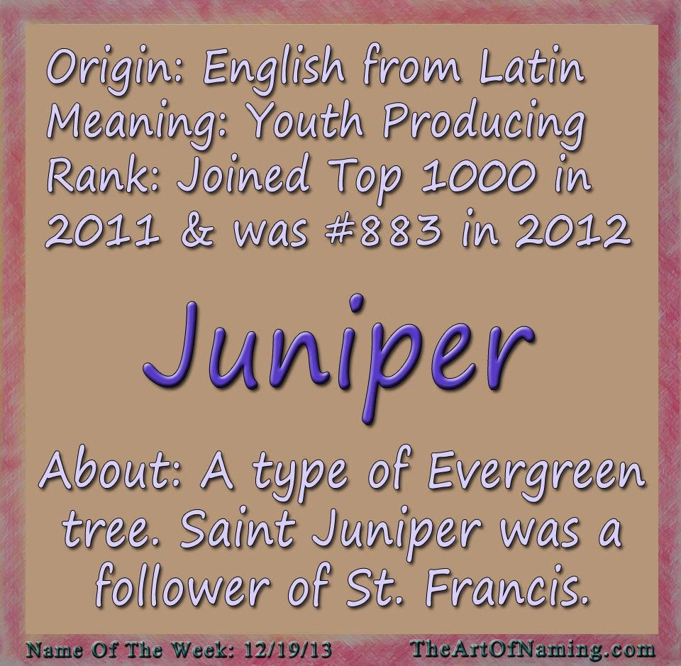 Pin By Maryanne On Saint Juniper Feast Day January 29 Pretty