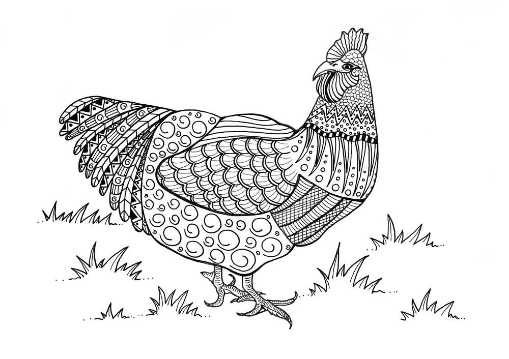 Colorful Chicken Adult Coloring Page Bird Coloring Pages
