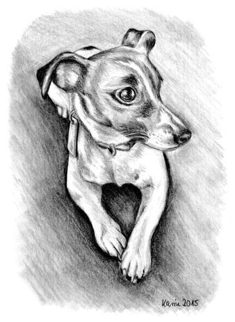 spike jack russell terrier bleistiftzeichnung hund zeichnungen von tieren pinterest. Black Bedroom Furniture Sets. Home Design Ideas