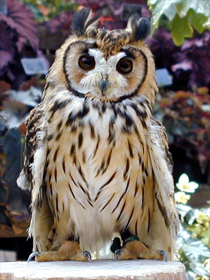 世界一可愛い鳥の種類ベスト50選 一覧 画像 Ailovei 美しい動物 可愛すぎる動物 ペットの鳥