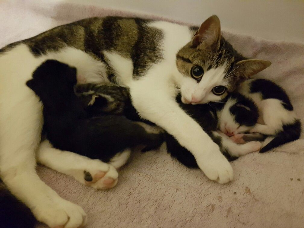 My sisters cat gave birth to kittens and look how cute she
