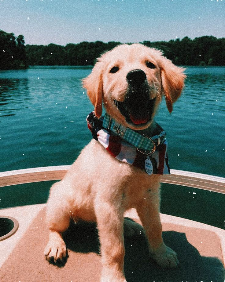 Pin By Juli 3 On My Edits In 2020 Dog Tumblr Happy Dogs Funny Cute Animals