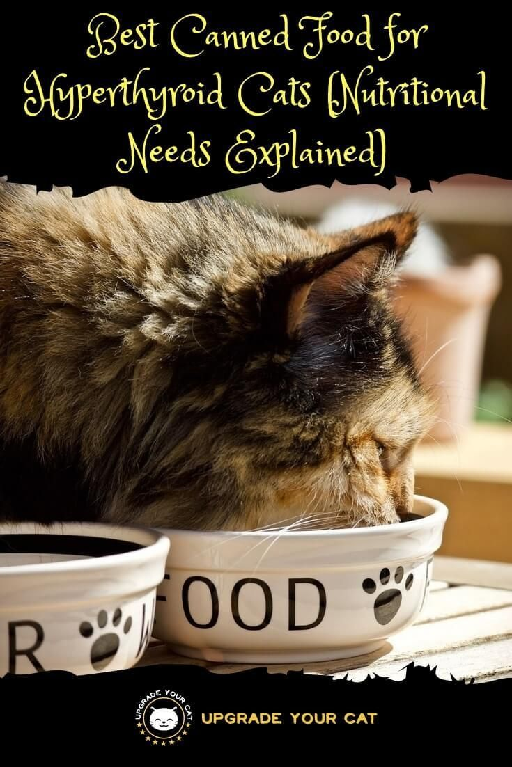 Best Canned Food for Hyperthyroid Cats Cat nutrition