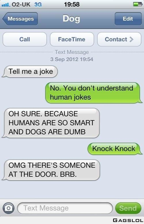 Dog Human jokes are not easy to understand !!!
