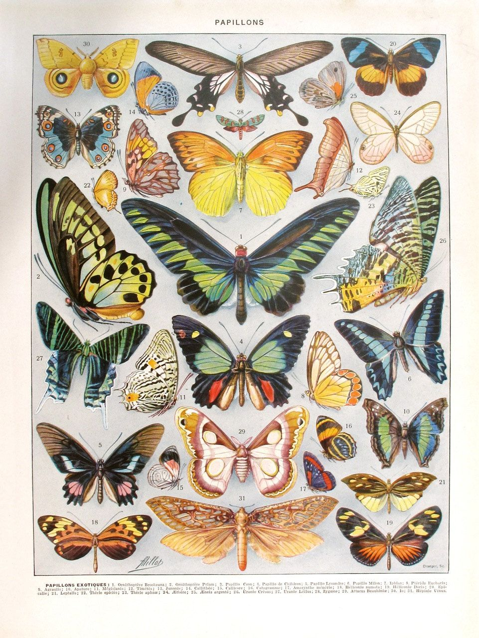1933 Vintage BUTTERFLIES French | Kelebekler | Pinterest | Mariposas ...