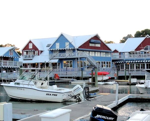Scenes From The South Hilton Head South Carolina Salty Dog Hilton Head Hilton Head Island