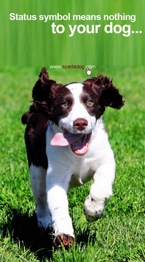 Status Symbol Means Nothing To Your Dog Spartadog Dogs Quotes