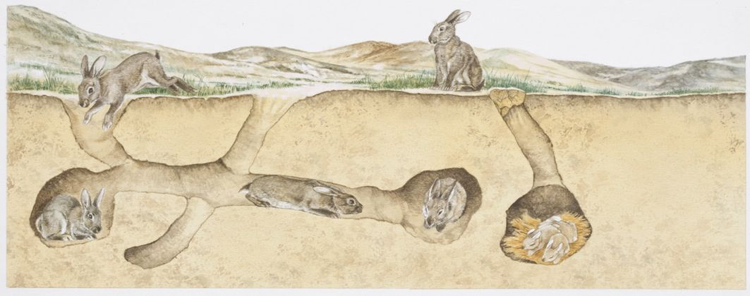 rabbit warren diagram find wiring diagram u2022 rh empcom co Pet Rabbit Habitat Rabbit Nesting Box