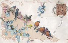 1901 pettirossi e uccellini - liberty gruss aus