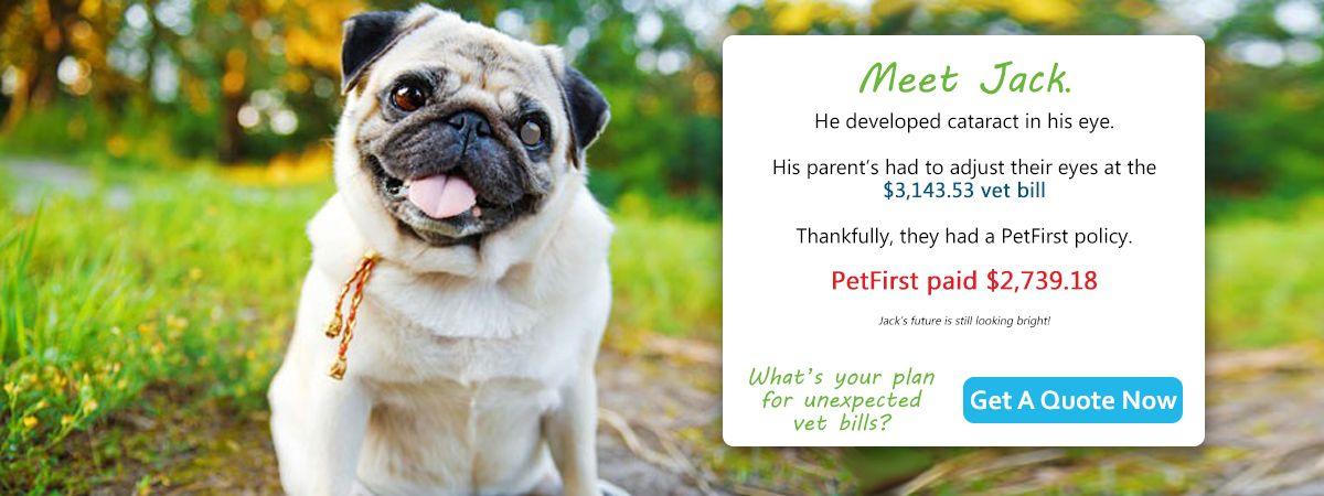 Meet Jack PetInsurance Pet insurance for dogs, Pet