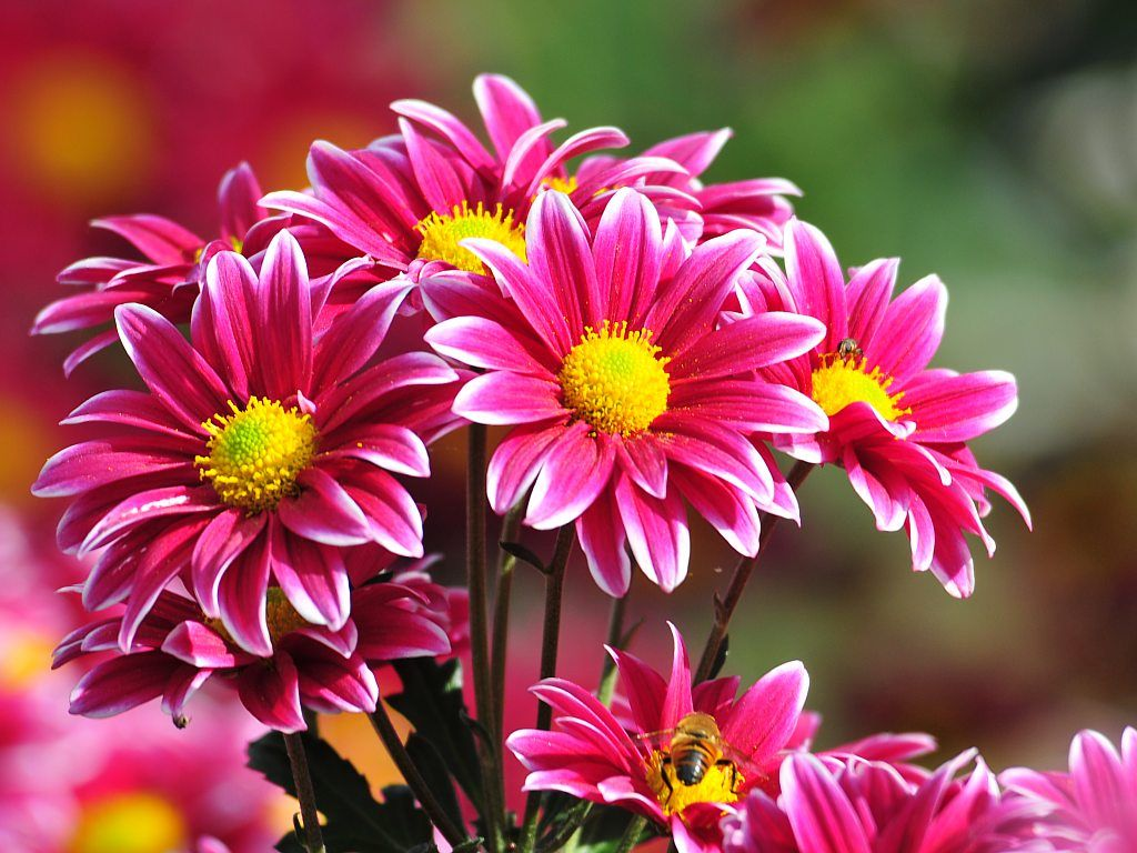 Flores-Rojas-Lluvia-Agua_01   Flower, Amor and Margaritas