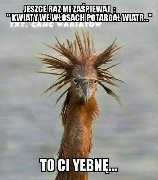 Obraz Moze Zawierac Tekst Humor Funny Animals Funny Memes