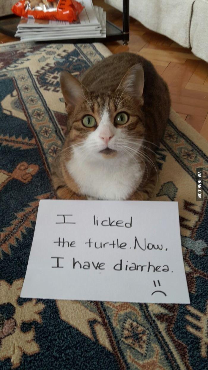 Turtle Makes Diarrhea Bad Cats Cat Shaming Animal Shaming