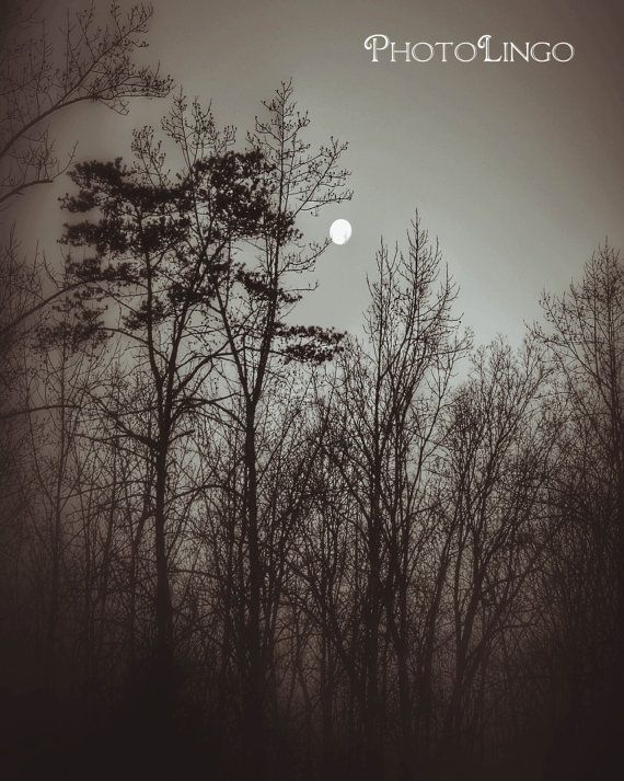 Fine Art Photography, Black and White Photograph, Trees, Moon, Botanical and Nature Print, Nature Photography, Print, Photography, Art, Wall Art, Wall Decor, Home Decor www.etsy.com/shop/PhotoLingo