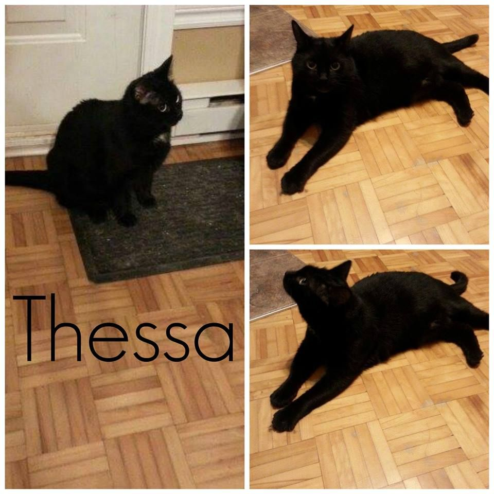 Montreal Available For Adoption Thessa 3 Approximately 18 Months Old Sterilised And Vaccinated Very Sociable Aband With Images Cat Adoption Animal Activism Adoption