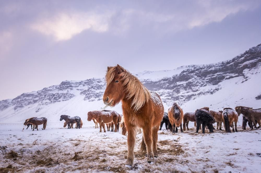 Daily Dozen — Photos -- National Geographic Your Shot