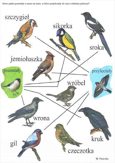 które ptaki zostają na zimę.jpg | Learn polish, Polish language, School art  projects