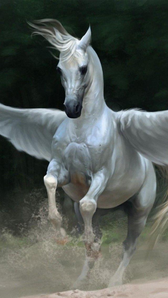 Fantasy Billede Hest Billeder Pegasus Baggrunde Vinger Baggrunde Baggrunde 640x1136 Iphone5 5s Skrivebordsbaggrunde Horses Fantasy Rare Animals
