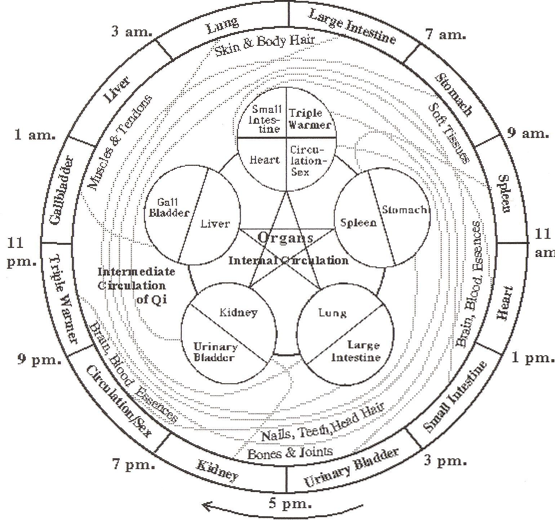 the body clock
