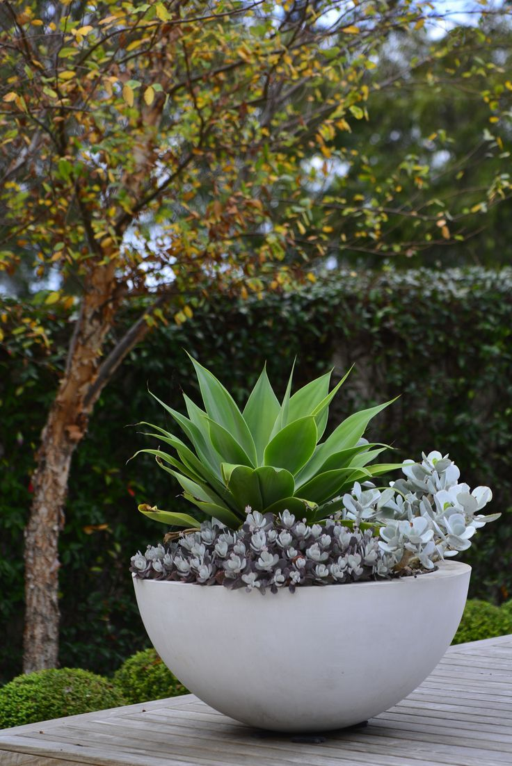 Image Result For Contemporary Succulent Urn Potted Succulents Outdoor Plants Deck Ideas