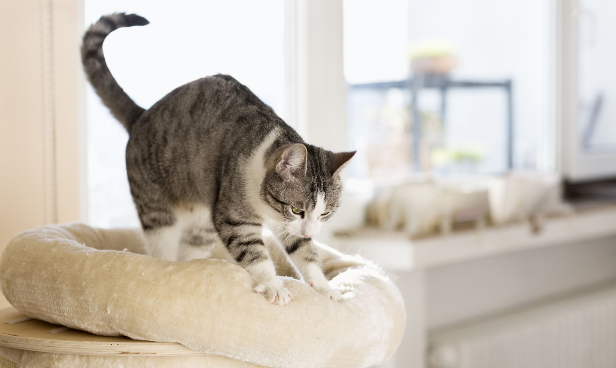 Finally, some straight answers to why our cats are always
