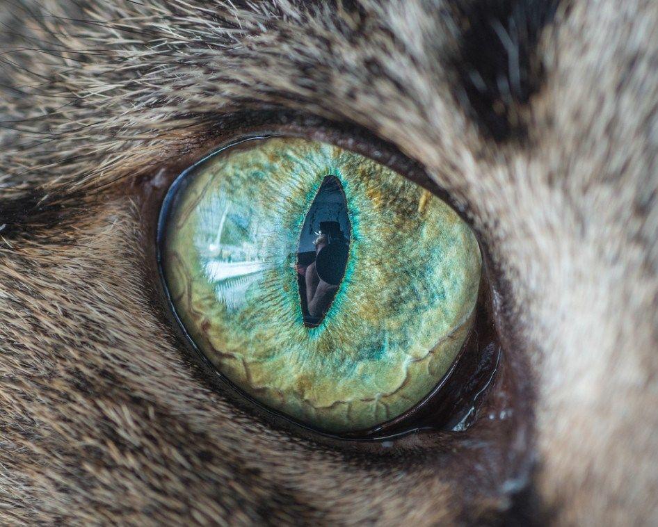 фото глаз животных обнародовали фотографии