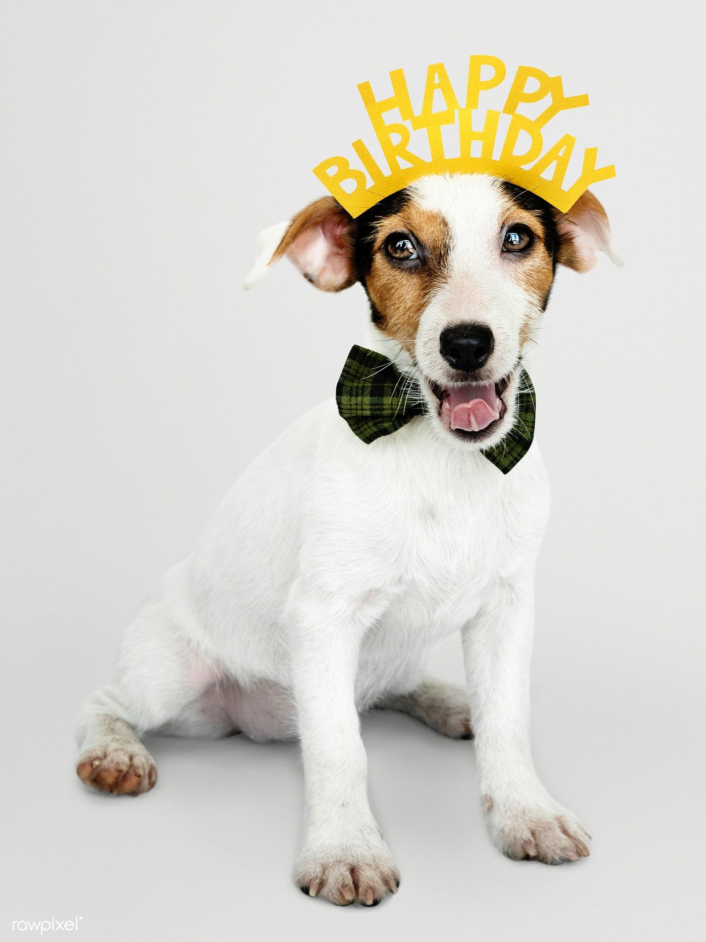 Download Premium Psd Of Adorable Jack Russell Retriever Puppy Wearing A Happy Birthday Puppy Happy Birthday Art Happy Birthday Crown