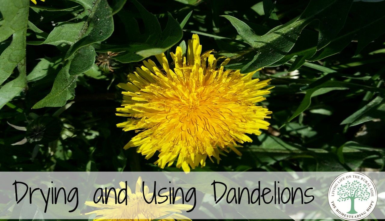 Dandelion infused lip balm all natural chapstick