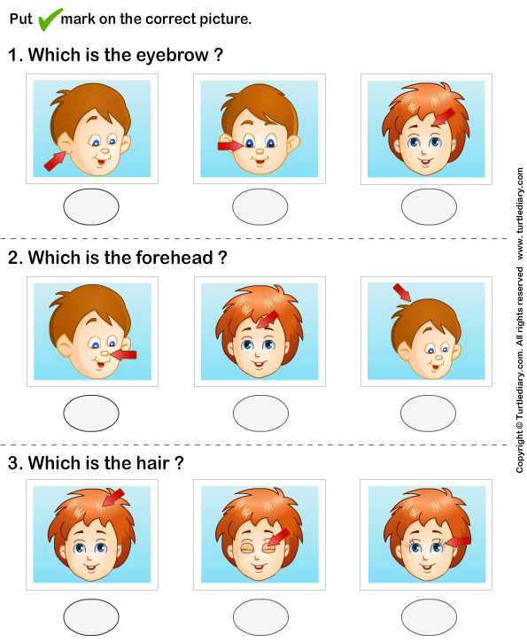 Identify Parts Of Human Face 3 Worksheet - TurtleDiary.com ...