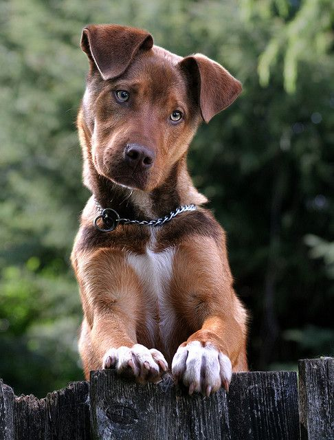 Mix Breed Dog So Cute Love It Re Pin By Stoneartusa Com