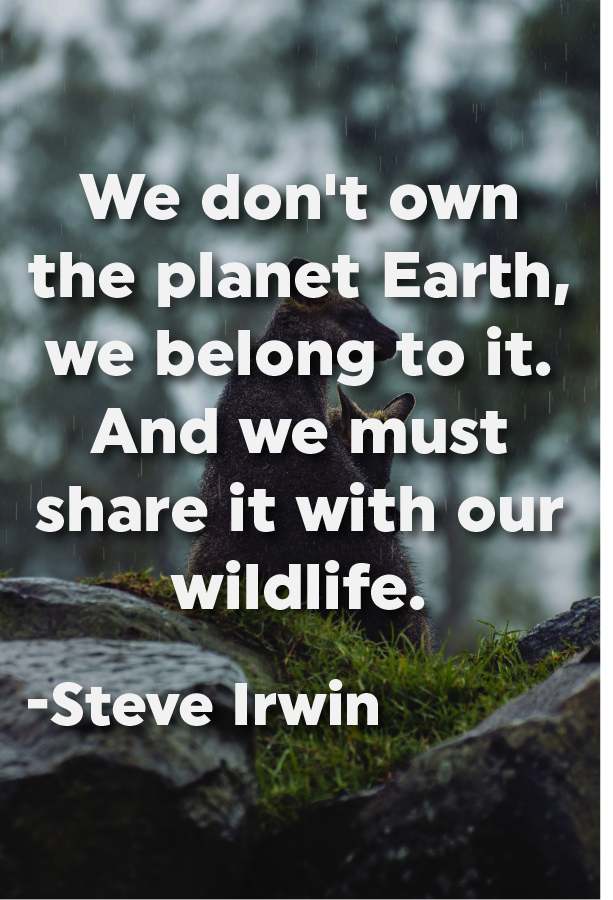 We Don T Own The Planet Earth We Belong To It And We Must Share It With Our Wildlife Steve Irwin Earth Quotes Nature Quotes Wildlife Quotes
