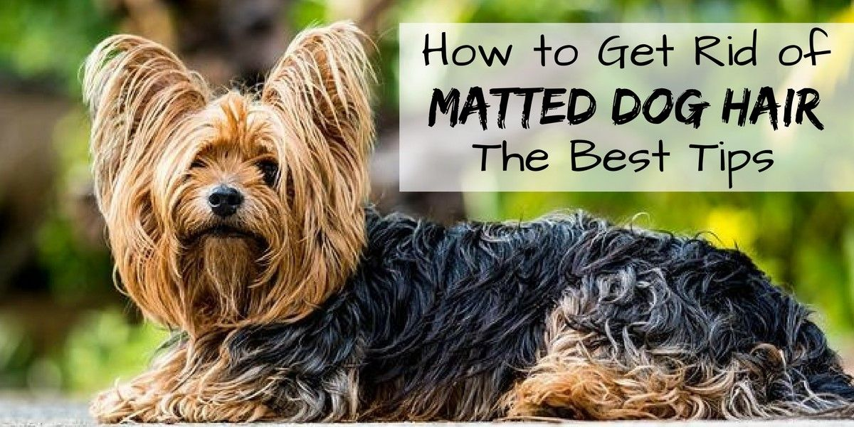How to get rid of matted dog hair the best tips matted