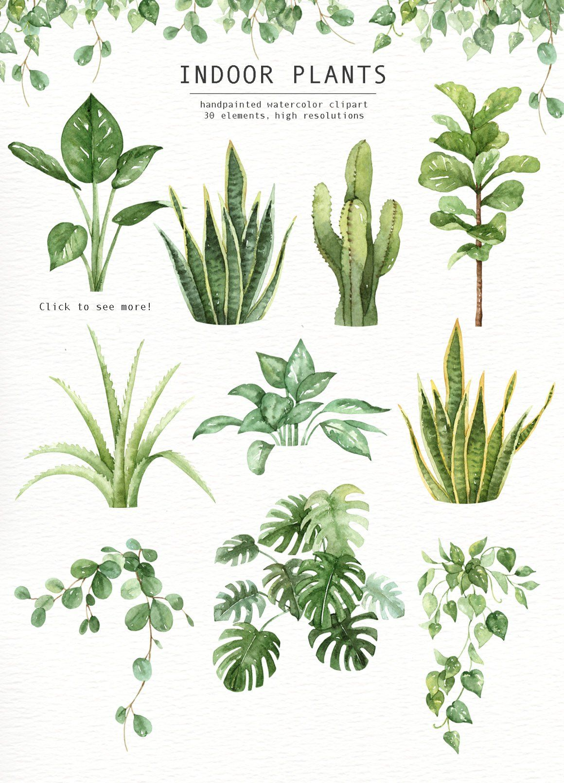 Indoor Plants Watercolor Clipart Watercolour Leaves Watercolor