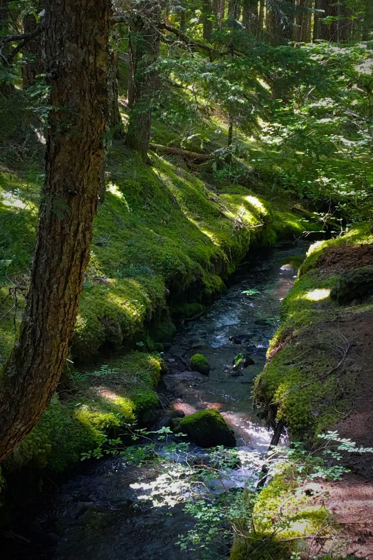 Hiking on Ramona Falls Trail, in the Cascades near Mt