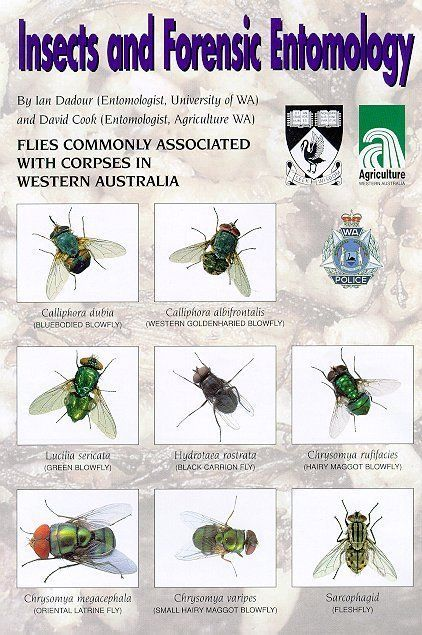 Insects And Forensic Entomology With Diptera From Western Australia Forensics Forensic Science Forensic Anthropology