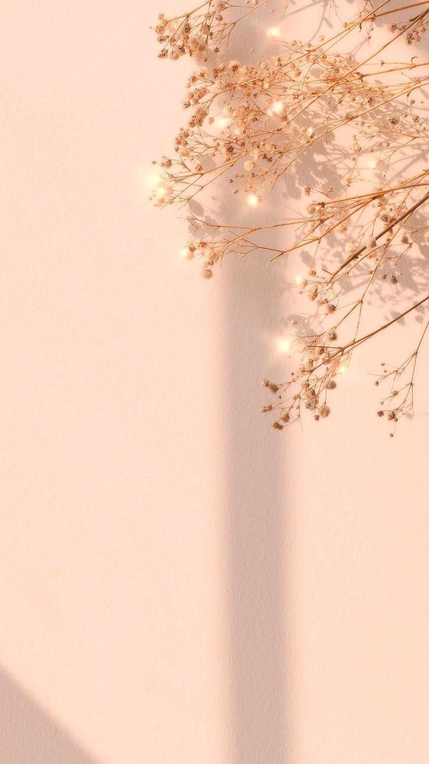 aesthetic background
