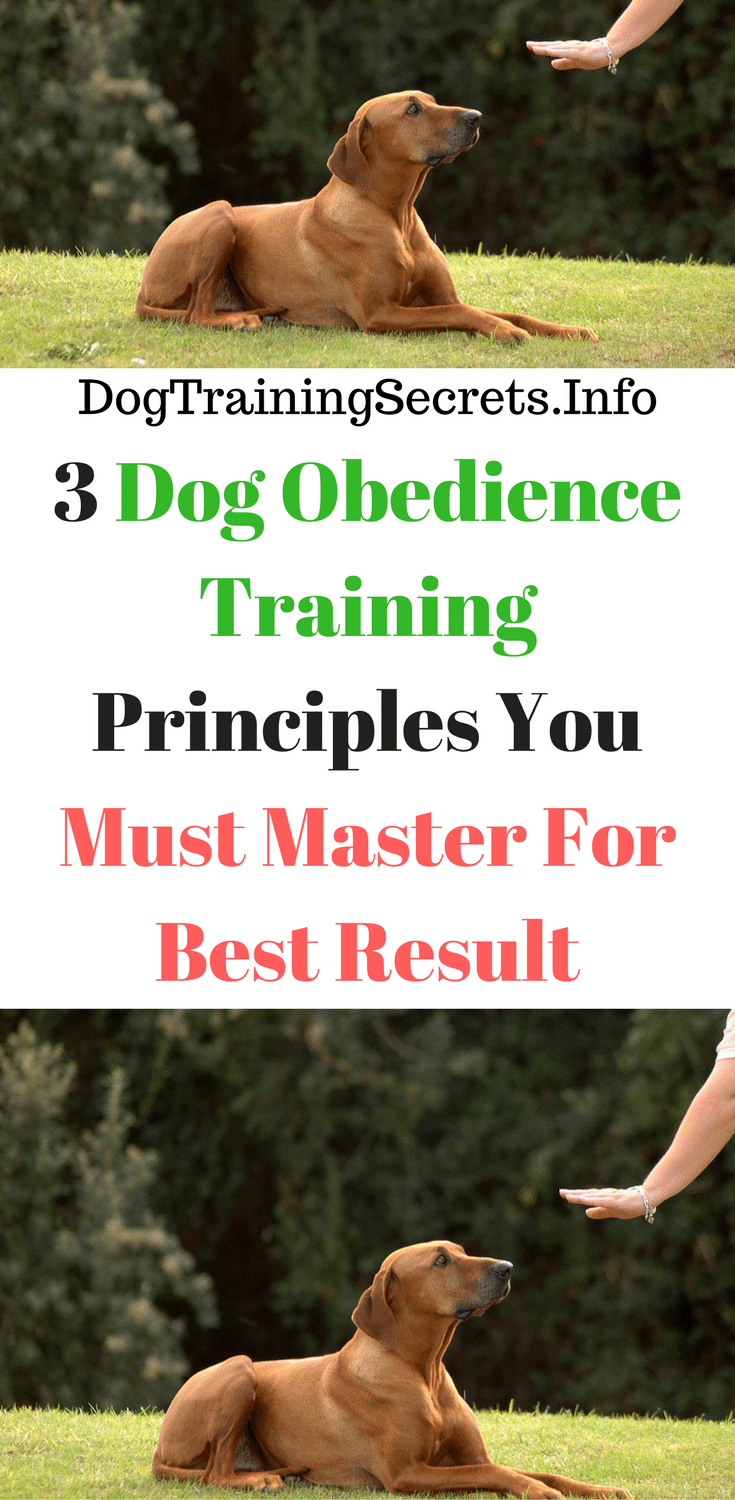 Dog Training Techniques – 3 That Work Fast