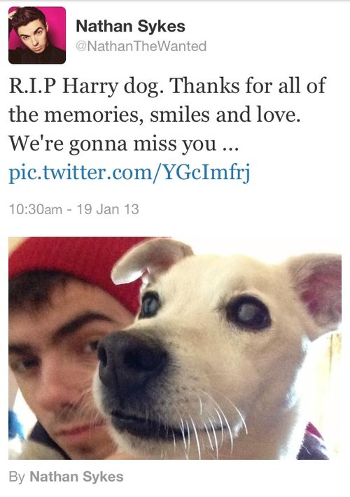 my poor bb lost his dog... :( TWFanmily will miss you Harry ='(