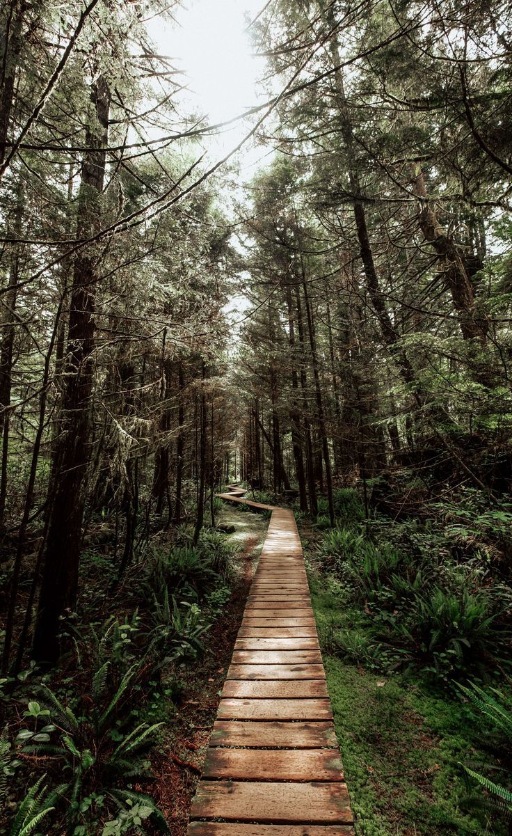 Rainforest Trail Tofino   How to Spend 3 Days in Tofino BC   Vancouver Island   British Columbia Travel   Canada Travel   Tofino Itinerary   Things to do Tofino   Tofino Restaurants   Where to eat Tofino   Tofino Hiking   Vancouver Weekend Trips   Rainfor
