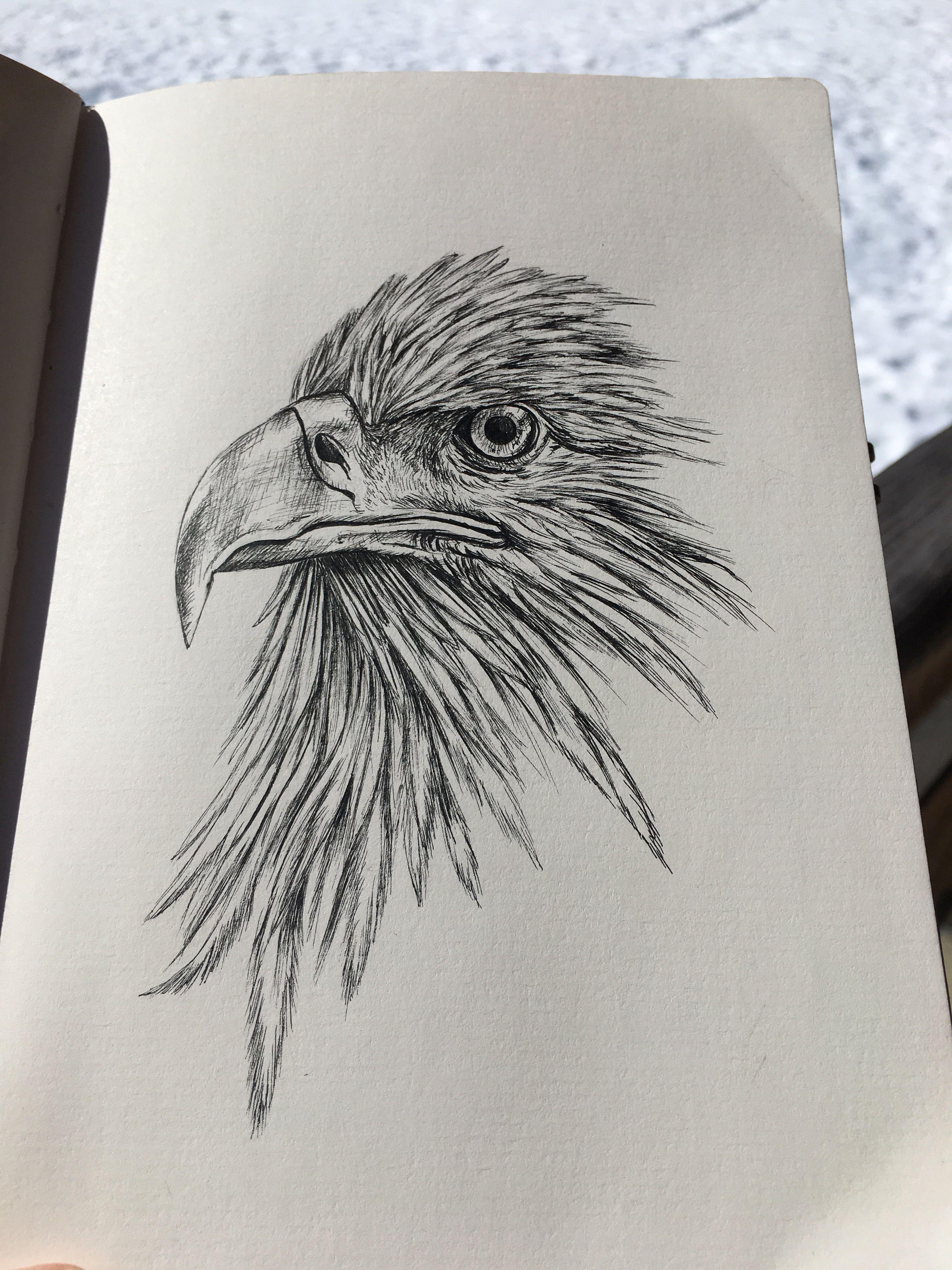 Crayonne Draw Drawings Dessin Crayonart Crayon Aigle