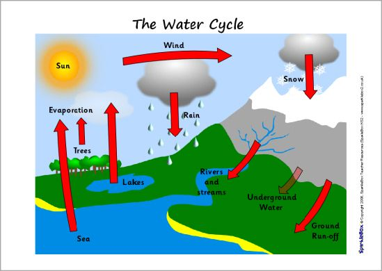 Diagram Of The Water Cycle For Kids on Plant Vocabulary Worksheet