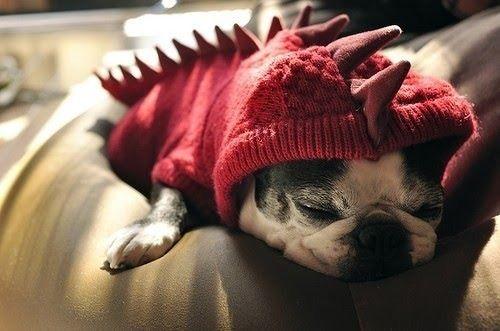 Animal,Animals,Cute,Dog,Lola,Photography - inspiring picture on PicShip.com