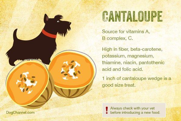 Conoces las 13 Frutas que tu perro puede comer y disfrutar? - Perrocontento.com
