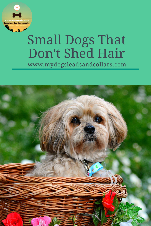 Pin On Dog Bloggs