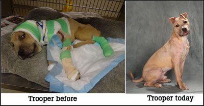 Humane Society Of Missouri Http Humane Society Animals Dogs